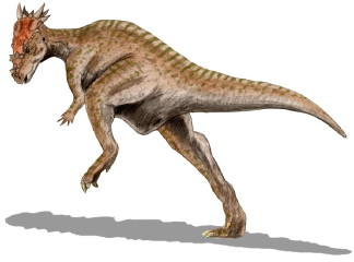 Dracorex hogwartsia. Illustration by ArthurWeasley