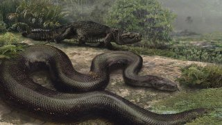 Titanoboa cerrejonensis by Jason Bourque